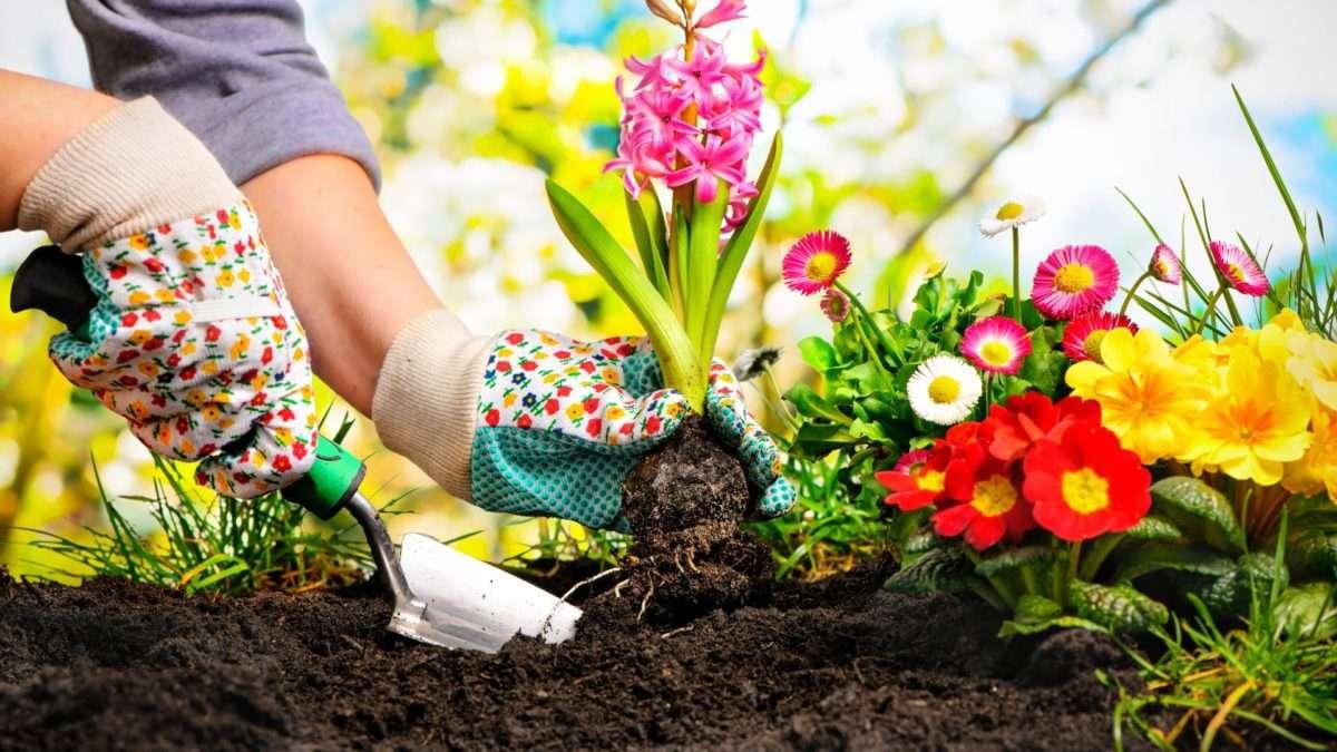 Trendy ogrodnicze i rozwojowe w nowoczesnej erze, o których powinniście wiedzieć