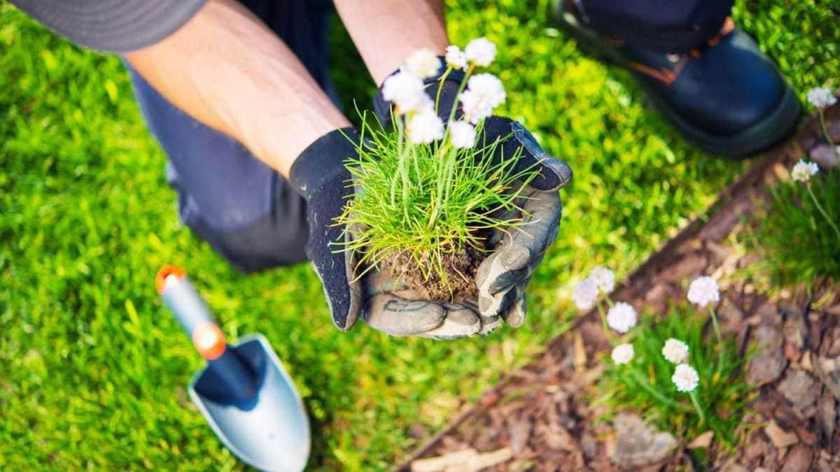 Wskazówki dotyczące pielęgnacji ogrodu, które należy wziąć pod uwagę wiosną