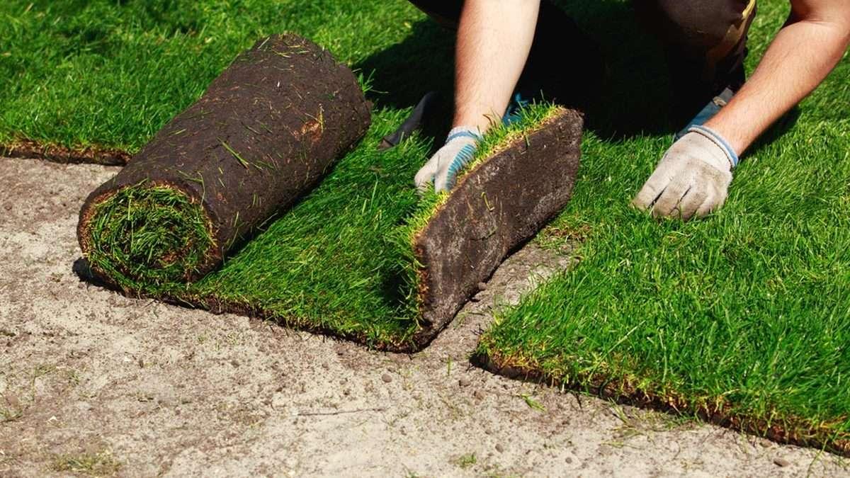 Jak założyć trawę z rolki?