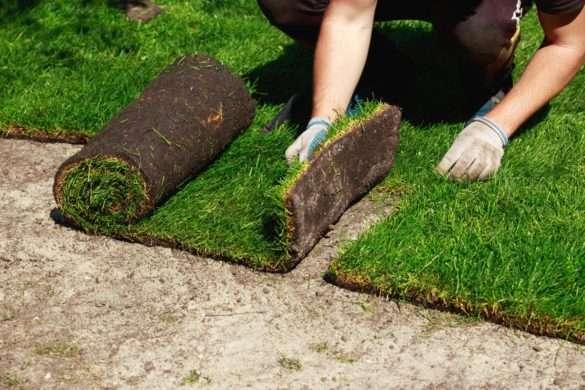 trawa z rolki