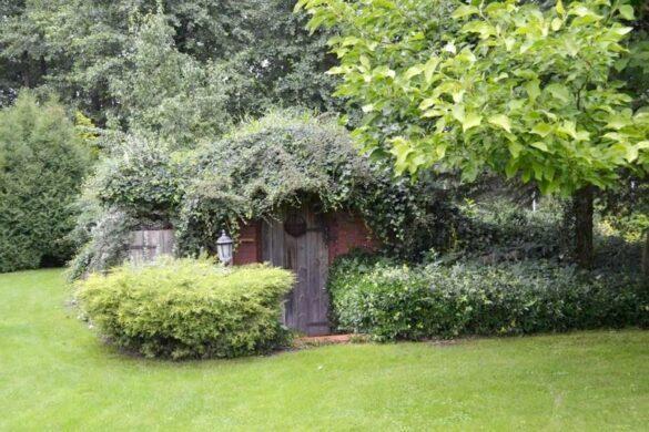 ziemianka ogrodowa
