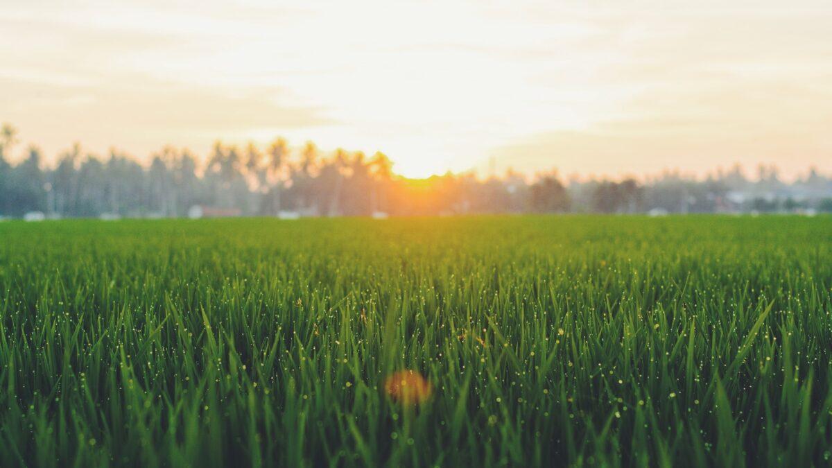 Jak zadbać o dobre nawodnienie trawnika i ogrodu przed upałami?