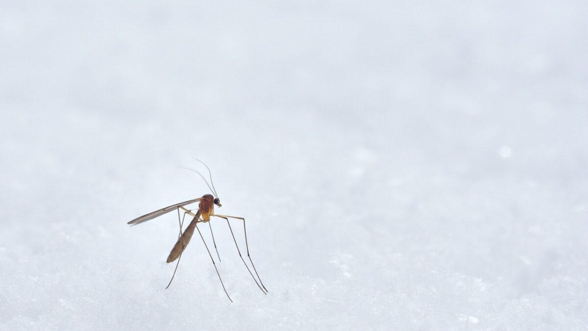 Czy można skutecznie uchronić dom przed owadami?