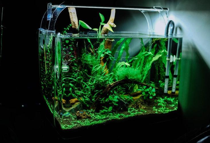 Aquascaping, czyli sztuka projektowania akwarium