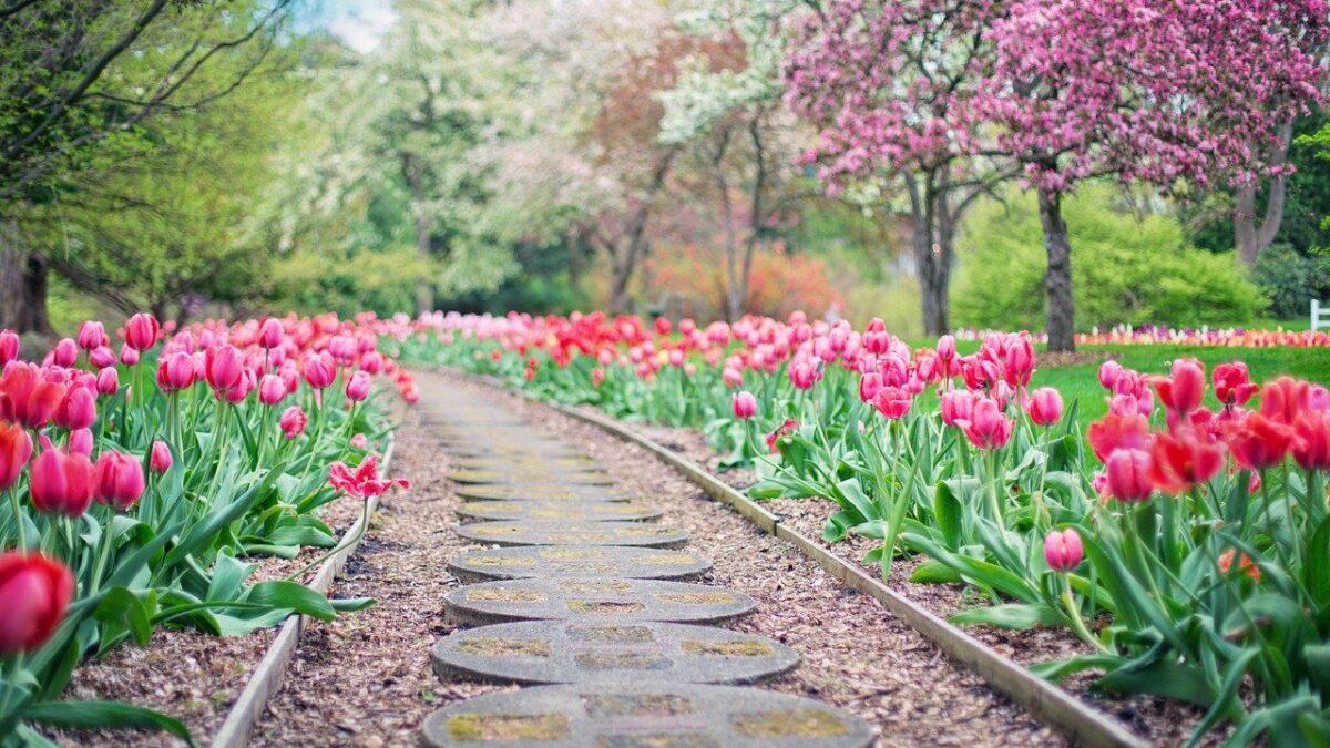 Dom z pięknym ogrodem – jak się do tego zabrać?